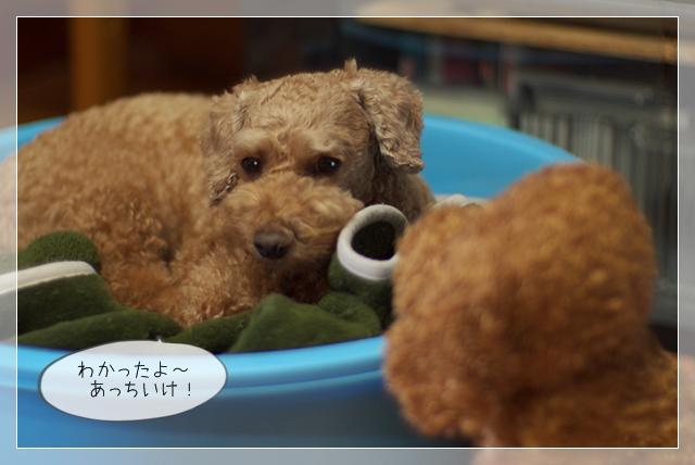 モデル犬09