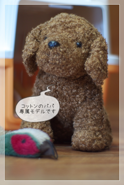 モデル犬08