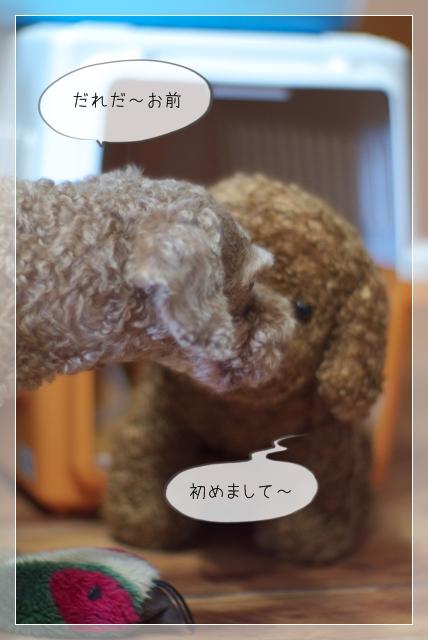 モデル犬07