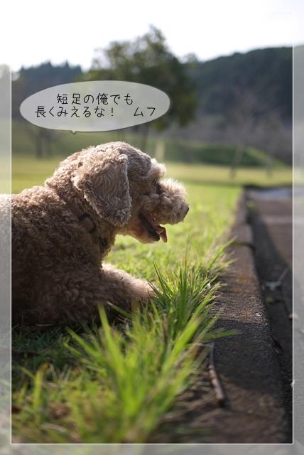 ちょっと散歩06