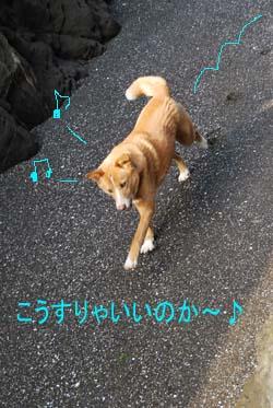 hashi_0486.jpg