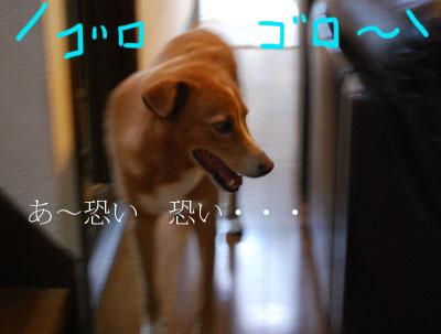 kaminari_0065.jpg