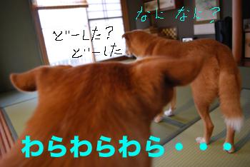 tatami_0005.jpg
