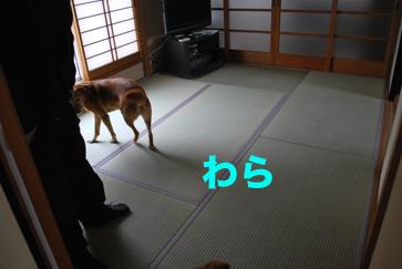 tatami_0016.jpg