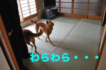 tatami_0017.jpg