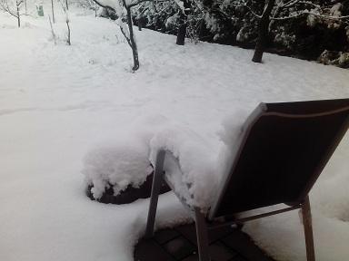 snowyeerda4.jpg