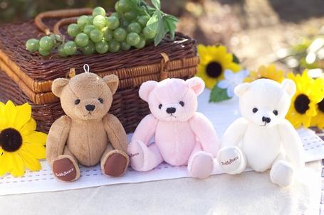 Teddy_s1
