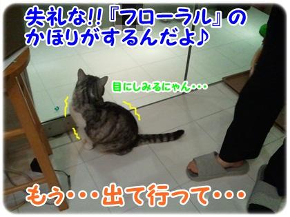 6_20120405005421.jpg