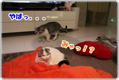 IMG_3968-006.jpg