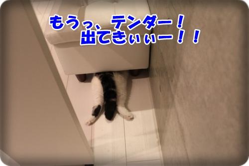 IMG_4530-003.jpg