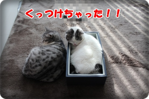 IMG_5324-010.jpg