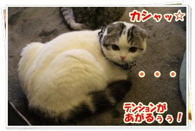 IMG_7501-004.jpg