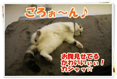 IMG_7505-006.jpg