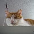キャットウォークで眠るマロンくん
