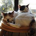窓辺で眠るシナモンちゃんと姫ちゃん
