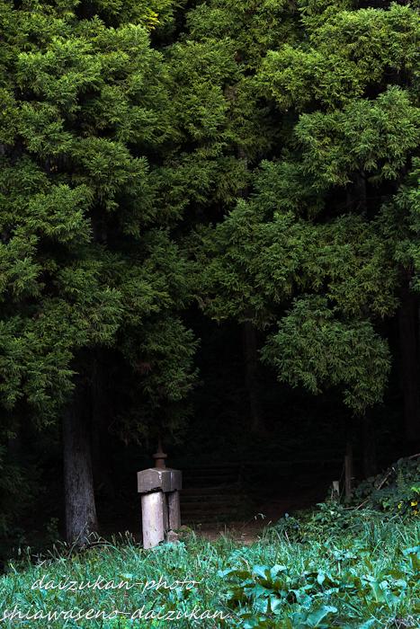 daizukan-photo-6916.jpg