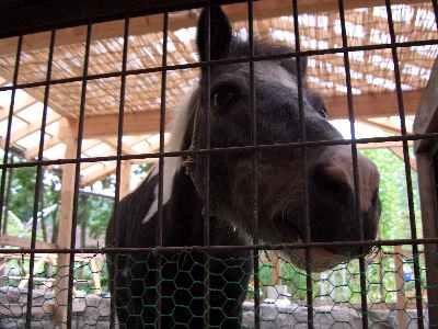 馬です.jpg