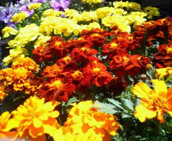 あたたかい花たち