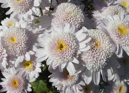 小さな花咲く
