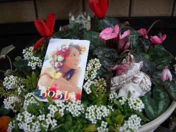 お花とKOKIA