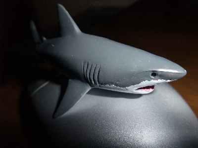 ホオジロザメ.jpg