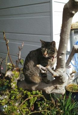 猫ねこ展3