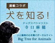 米国発!連載コラム「犬を知る!」