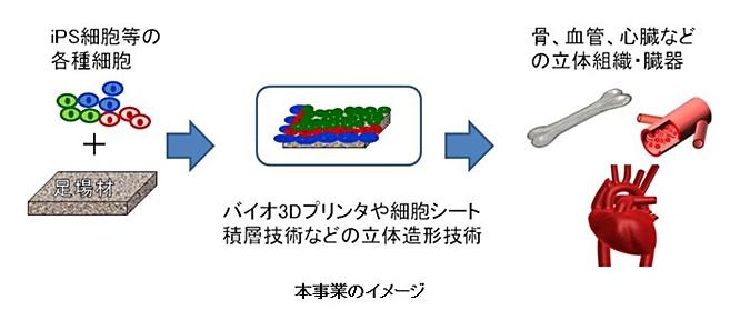 NEDO_ regenerative medicine_3Dprint_image