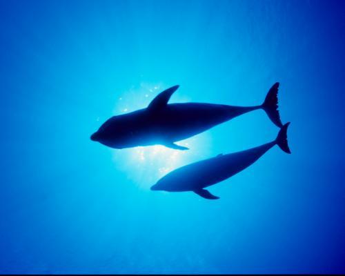 dolphins-1004_convert_20141112135934.jpg