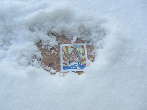 雪の下から・・・・・
