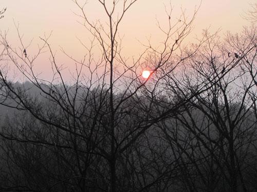 太陽が成る木
