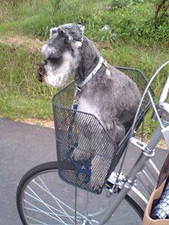 自転車でお出かけ♪.jpg