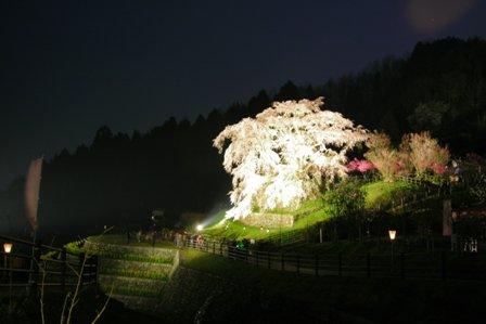 tukushi20378.JPG