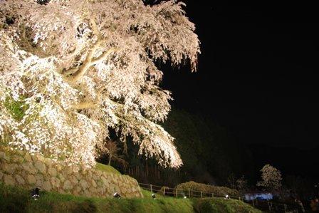 tukushi20385.JPG