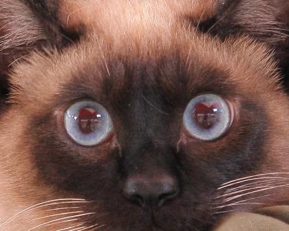 ハートの瞳.jpg