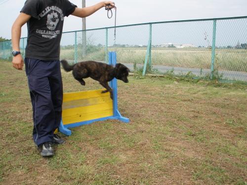 金太郎(仮) ジャンプ