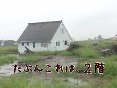 dw-5.jpg