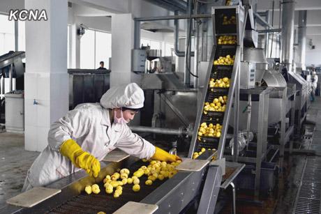 ジャガイモ加工工場ライン