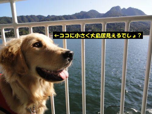 2011_1026_142003.jpg