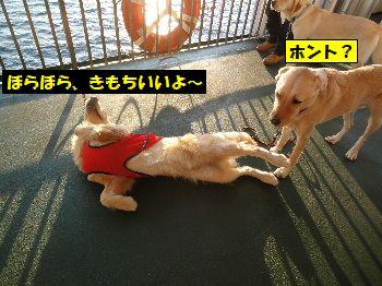 2011_1026_164842.jpg