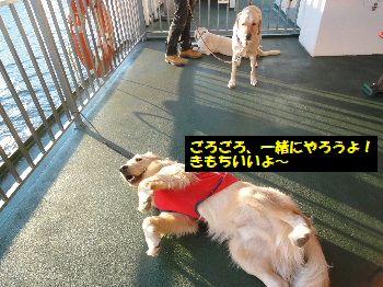 2011_1026_165009.jpg