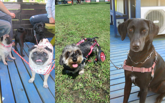 2011-09-24+黒い犬白い犬集まれ3