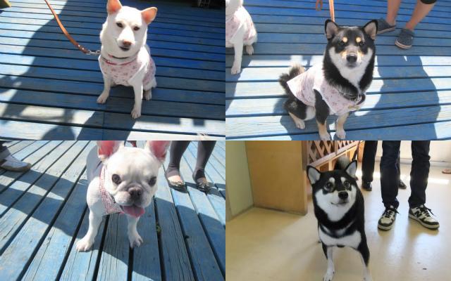 2011-09-24+黒い犬白い犬集まれ2