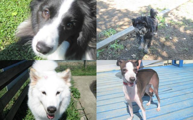 2011-09-24+黒い犬白い犬集まれ1
