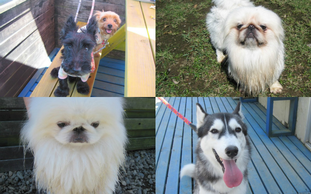2011-09-24+黒い犬白い犬集まれ