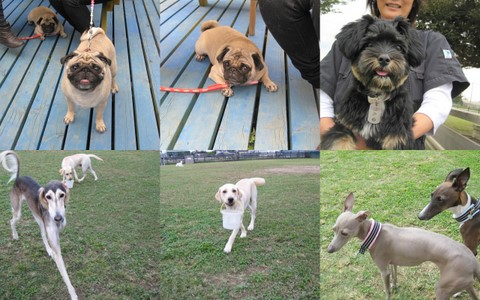 2011-10-01 犬種名に「テリア」が付く子2