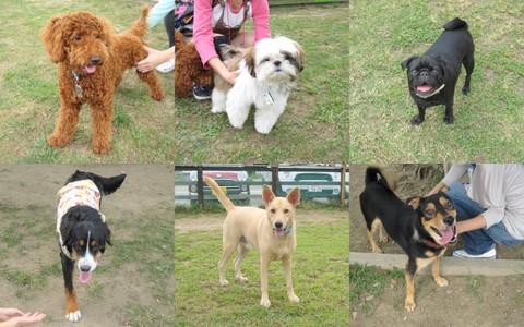 2011-10-01 犬種名に「テリア」が付く子1