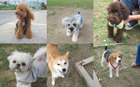 2011-10-01 犬種名に「テリア」が付く子