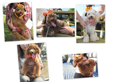 2011-10-16 コーギー・プードル集まれ 1
