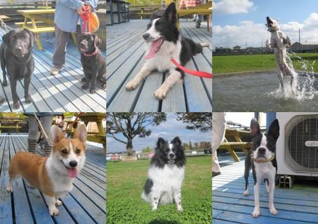 2011-11-12和犬集まれ 2